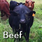 Grassfed Beef for Sale