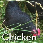 Pastured Chicken for Sale