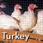 Beyond Organic Turkey for Sale